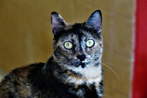 Las primeras horas en casa de un gato recién adoptado