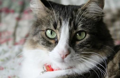 Cuidados para los gatos de edad avanzada