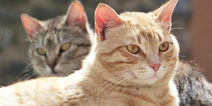 Recomendaciones para cuidar y adiestrar a tu gato