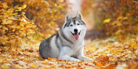 Como garantizar la mejor calidad de vida para un perro