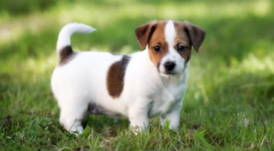 Entregar nuestra mascota a un pariente o amigo, una responsable decisión