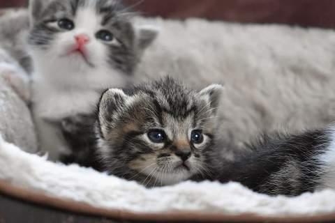 Claves para el mejor cuidado de los gatos en casa