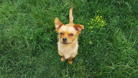 Los mejores consejos para el cuidado de los perros pequeños