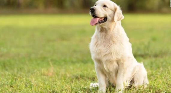 Cuidados básicos que se les debe de dar a las mascotas y animales de compañía