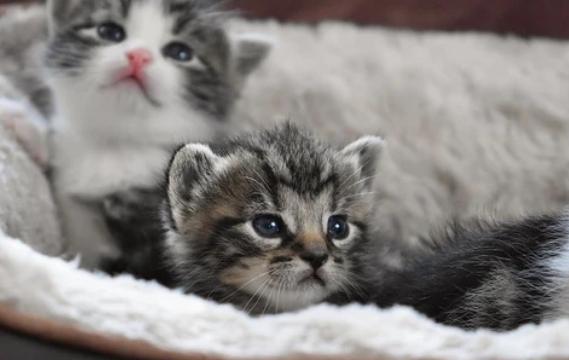 Como proteger a un gato del frío en el invierno