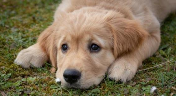 Cómo prevenir el sobrepeso en los perros y gatos