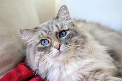 El problema de la leucemia felina