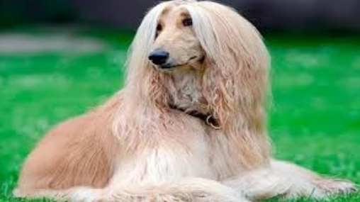 Las claves más importantes para el cuidado de las mascotas