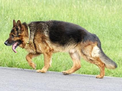 La opción de pasear a los perros sin correa