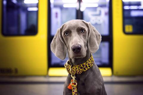 El sistema respiratorio del perro y los cuidados veterinarios