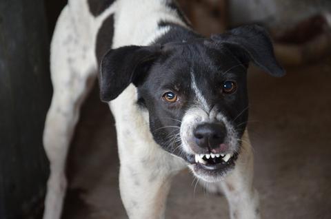 El problema de la agresividad en los perros