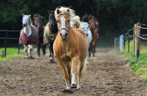 Higiene y cuidados indispensables para el caballo