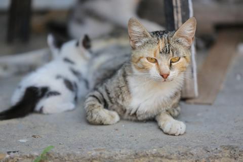 Cómo mejorar los cuidados del gato en el hogar