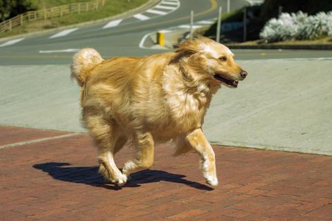 Cómo prevenir los casos de asfixia en los perros