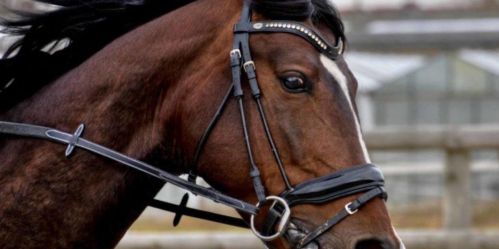 Conoce cuáles son las enfermedades más graves del caballo