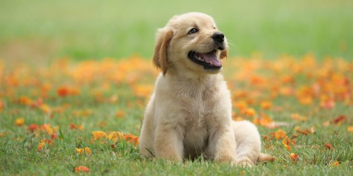 El problema del pinzamiento en los canes
