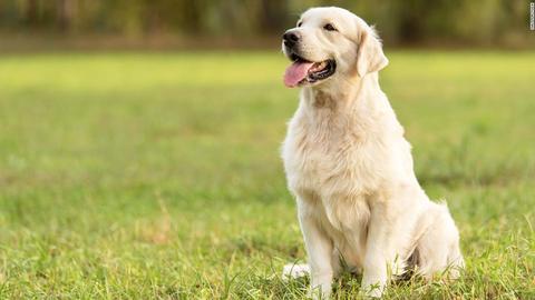 El problema del raquitismo en los perros