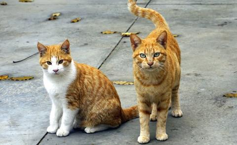 Principales procedimientos para la desparasitación del gato