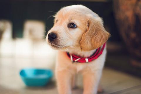 Cuidados, salud y adiestramiento de cachorros