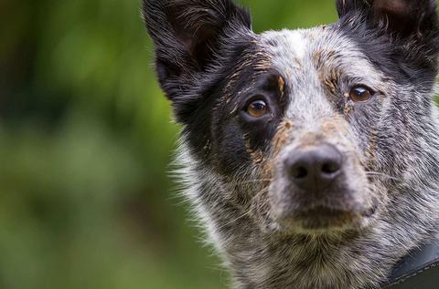 Por qué mi can parece tragar saliva con frecuencia