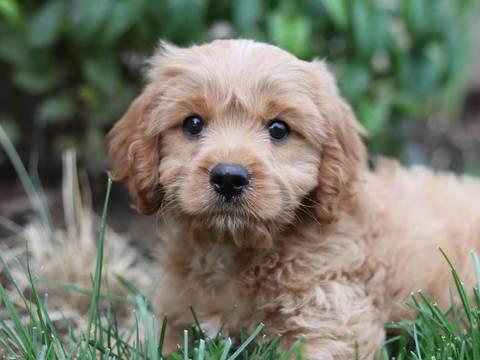 El problema del ictus en los canes