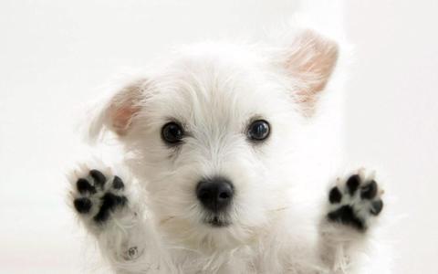 Responsabilidad y dedicación en el cuidado de las mascotas