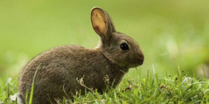 Por qué mi conejo se queda inmóvil aunque respira