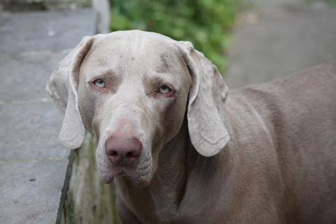 Conocer más acerca de la eutanasia veterinaria