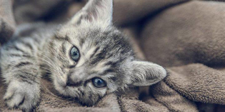Cómo se atienden los problemas en la columna del gato